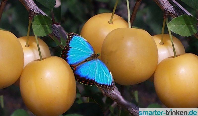 Mirabellen – die zarten Sommerfrüchtchen